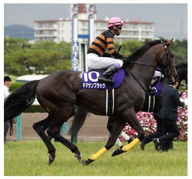 有馬記念で引退!キタサンブラック獲得賞金歴代1位でも北島三郎は赤字?